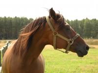 Koniu, gdzie Twoje maniery?