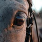 Koń i pojęcie czasu
