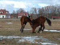 Zbrodnia i kara – czy można konia karać biciem?
