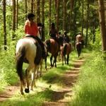 Czy Polacy kochają konie?