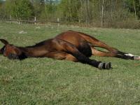 Jak odpoczywa koń?