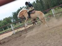 Gdy koń kozłuje