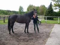 Prowadzenie konia w ręku – przestań robić to źle!