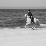 Moje konie czołowe – krótki przegląd