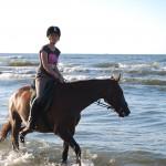 Mimika i język ciała konia