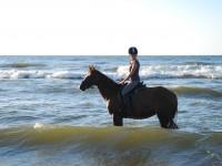 Jeździec idealny – jakie cechy powinien mieć?