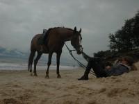 Pomoce jeździeckie – wodze