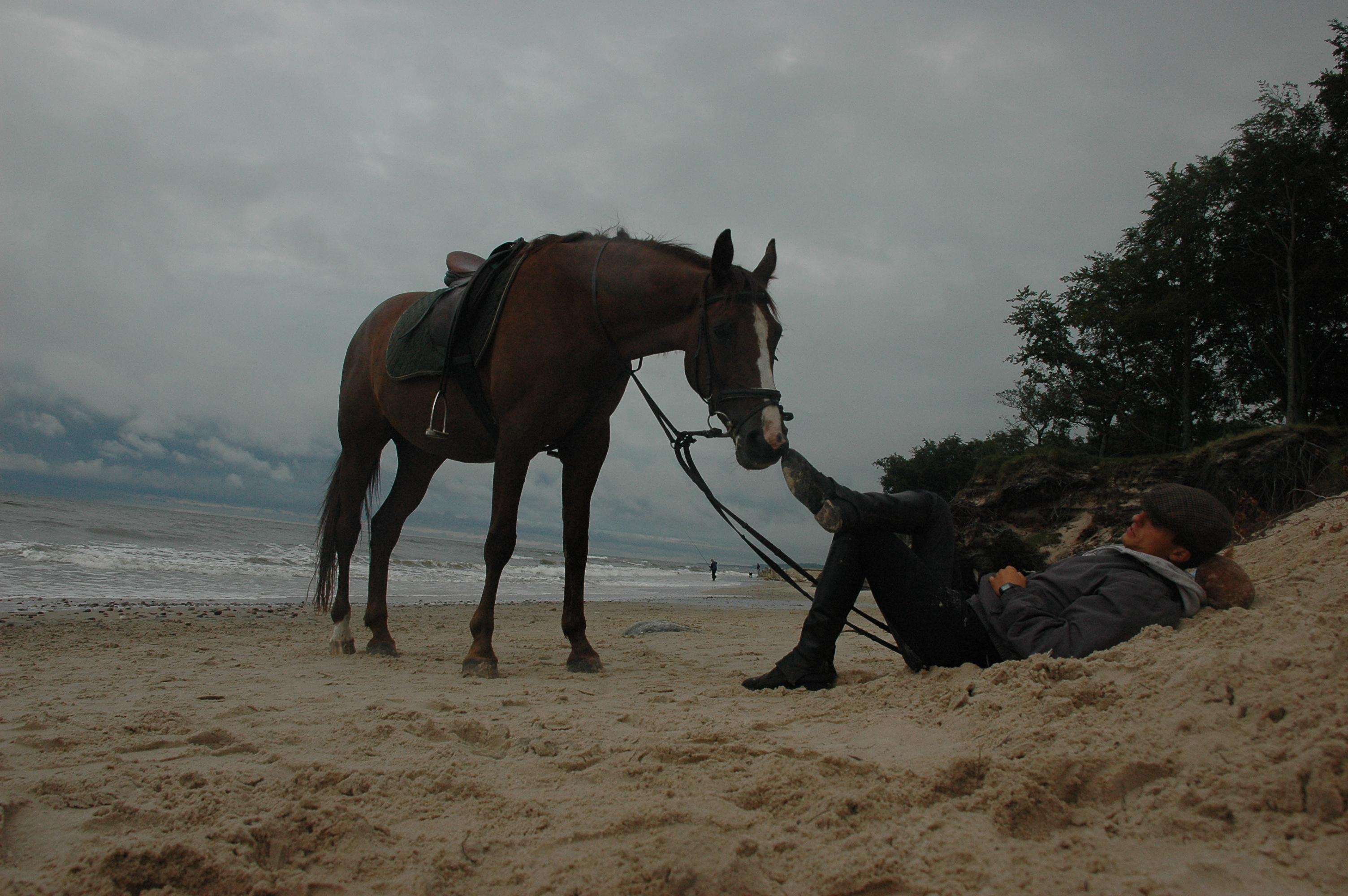 bfe5d2d52890b Podstawowa jazda konna to prowadzenie konia na trzech pomocach: