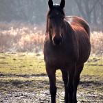 Każdy jaki jest, koń widzi