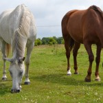 Spacerniak dla więźnia – nie trzymaj konia w karcerze!