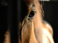 Jak kupowałam sobie konia