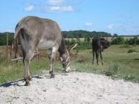 Lekcja historii nr 1 – o pochodzeniu koni