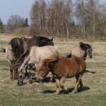 Lekcja historii nr 2 – o udomowieniu koni