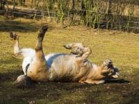 Pielęgnacja końskiej sierści