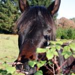 Podjadanie trawy w terenie – czy pozwalać koniowi pod siodłem na jedzenie?