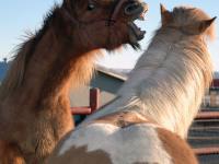 TOP 10. Dziesięć typów koni szkółkowych