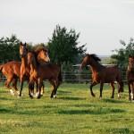 Tworzymy stado – najlepszy dobór koni
