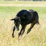 10 rzeczy, których konie nie lubią