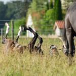 Koń ma cztery nogi – zadbaj o nie w czterech krokach