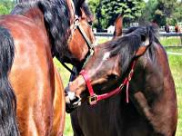Jak nagradzać konia?