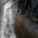 Siódme poty – 7 rzeczy, które warto wiedzieć o końskim pocie