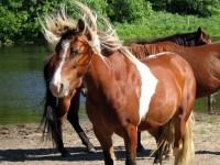 Bad hair day – końska grzywa u fryzjera