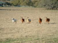Jak złapać konia na pastwisku?