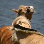 Agresja u koni – czy powinniśmy się ich bać?