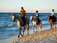 Obóz jeździecki – końskim okiem