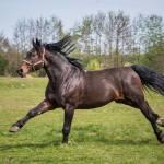 Szukam konia!