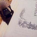 Jak utknęłam w wyjściu z króliczej nory…