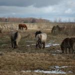 Te biedne konie…