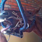 Koń u dentysty