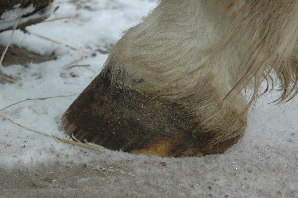 back hoof 3