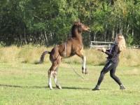 It's party time! Jak się bawią konie?
