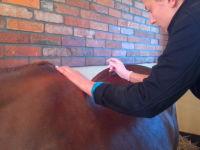 Gra w darta czyli jak się robi koniowi zastrzyk?