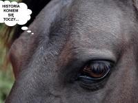 Przypadek-wypadek. Jak koń niechcąco zmienił historię.