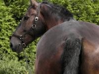 Dlaczego koń wyciera sobie ogon?