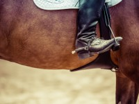 Obtarcia na końskiej skórze