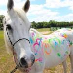 Znaki szczególne – odmiany, które wyróżniają konia z szeregu popularnych maści