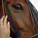 Dlaczego koń Cię nie słucha? Bo Ty nie słuchasz jego!