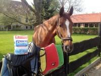 Pranie i dezynfekcja końskiego sprzętu – test proszku Clovin II Septon