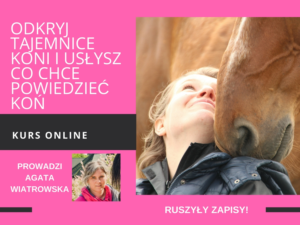 Kurs online baner kopia