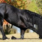 Proces uczenia się – jak koń przyswaja wiedzę? ODCINEK 4 – WARUNKOWANIE